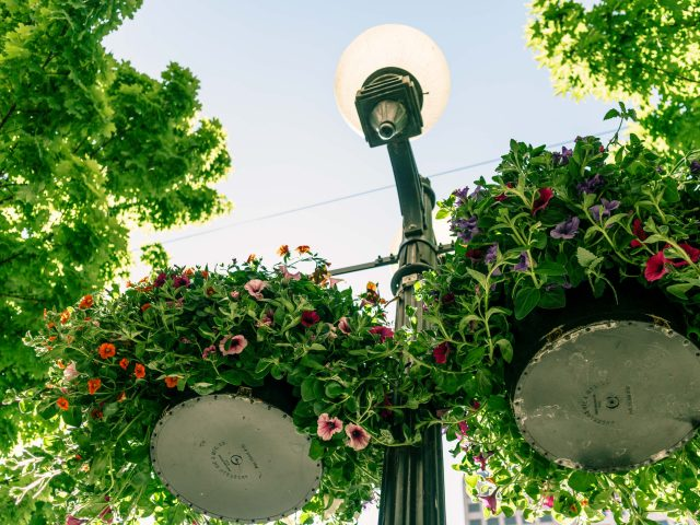 Pike Pine Hanging Baskets